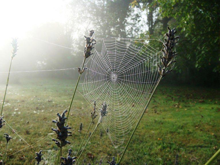 Didierdefrance toiles d 39 araign es un matin de ros e - Toile d araignee en papier ...